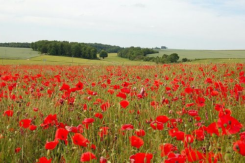 essay on flanders field In flanders fields literary analysis of a poem by molly in flanders fields was written during wwi and is the most notable poem from that time.
